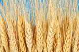 DA pentru MADR - Dezvoltam Aptitudini pentru Ministerul Agriculturii si Dezvoltarii Rurale